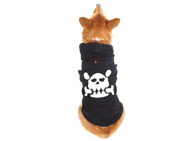 Dog Hoodies warehouse sale